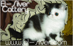 El-silver cattery
